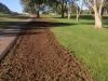 fescue renovation