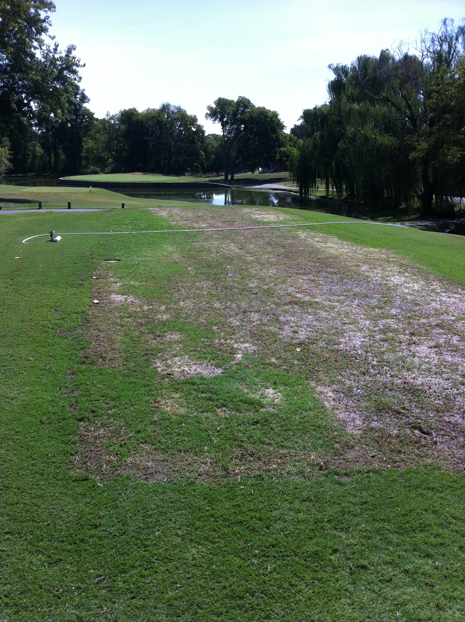 Two weeks after Laser Leveling