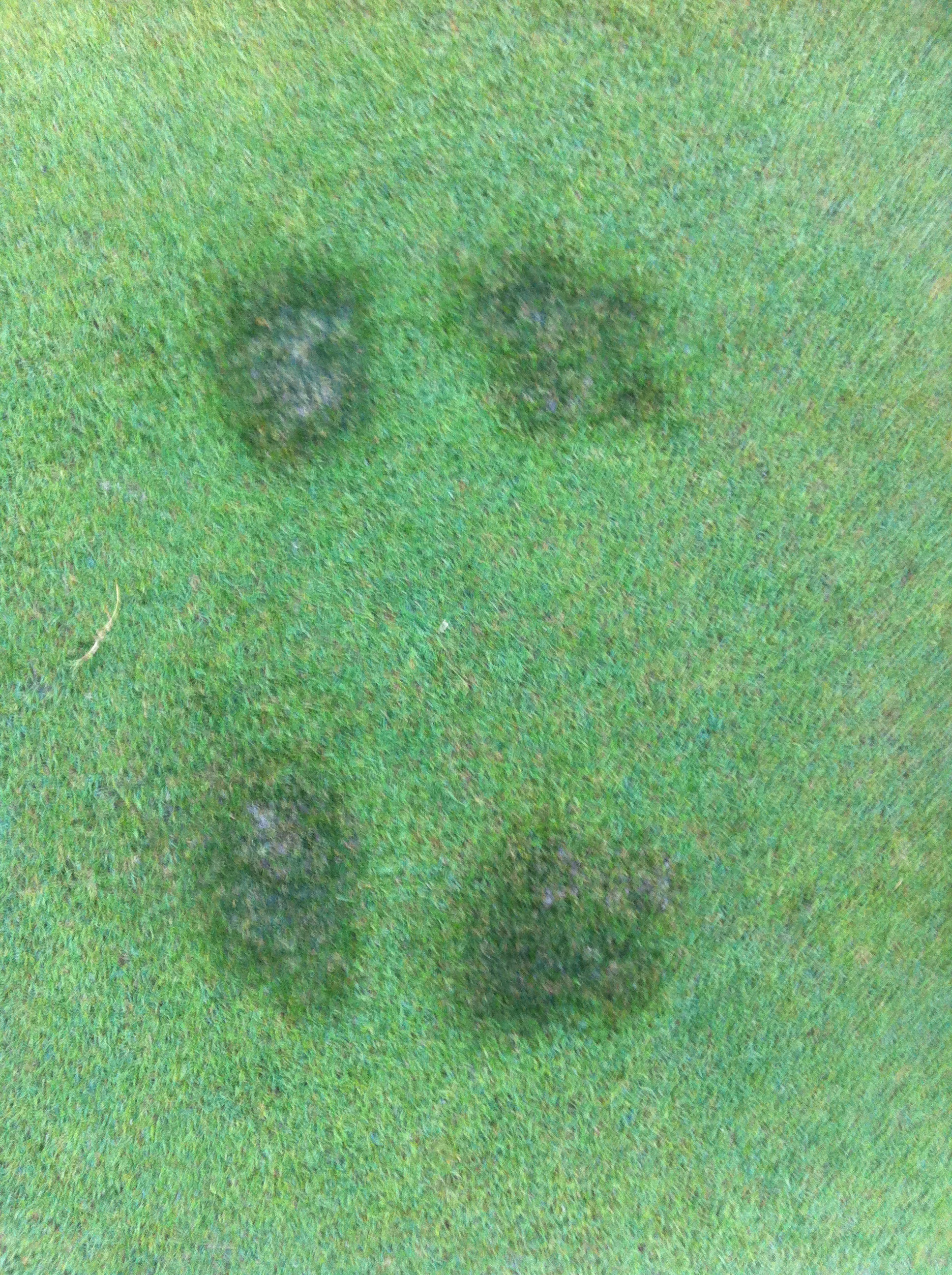 Foot Prints on the Putting Green