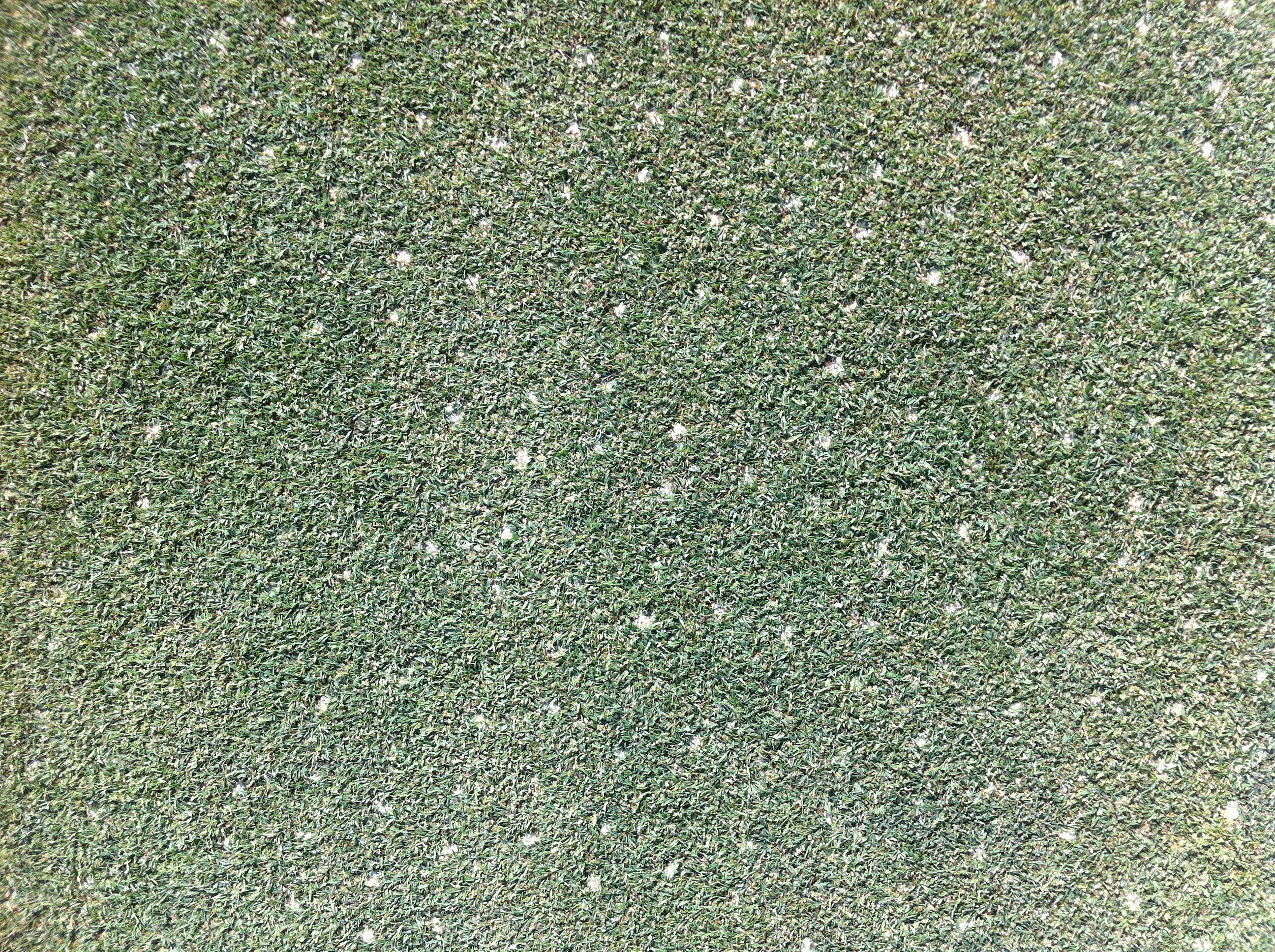 8 Days After Aerification