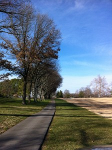 #11 Tree Canopy  - After