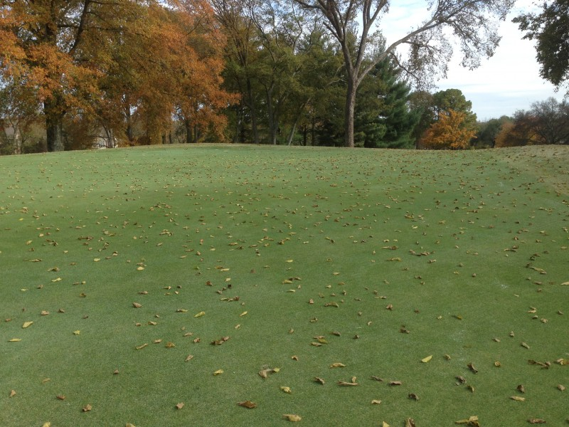 Leaves on #2 green 20 minutes after being cleaned