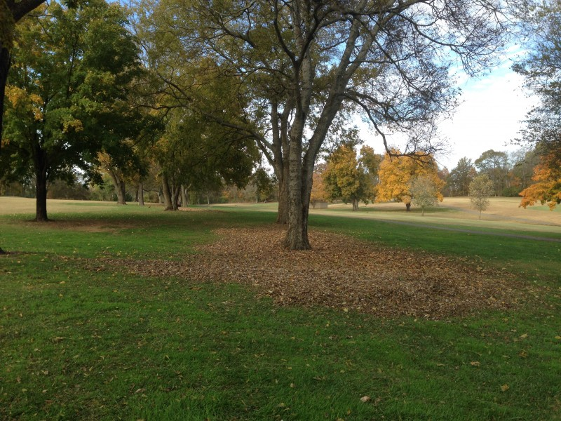 Directing Leaves to Fescue Areas
